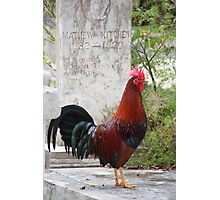 Rooster on Grave Photographic Print
