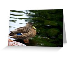 a fowl beauty-Crown Plaza pond Nashua Greeting Card