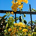 Yellow bougainvillea by Linn Arvidsson