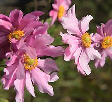 Japanese Anenomes of September by Pamela Jayne Smith