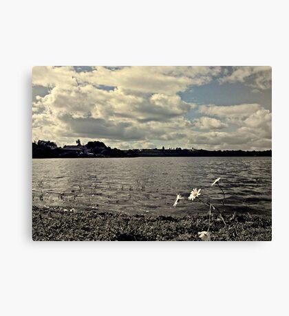 Windswept Daisies Canvas Print