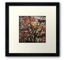 colorful tree in summer Framed Print