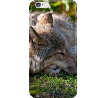 Sleeping Timber Wolf iPhone Case/Skin