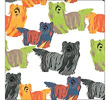 dog Skye Terrier pattern Photographic Print