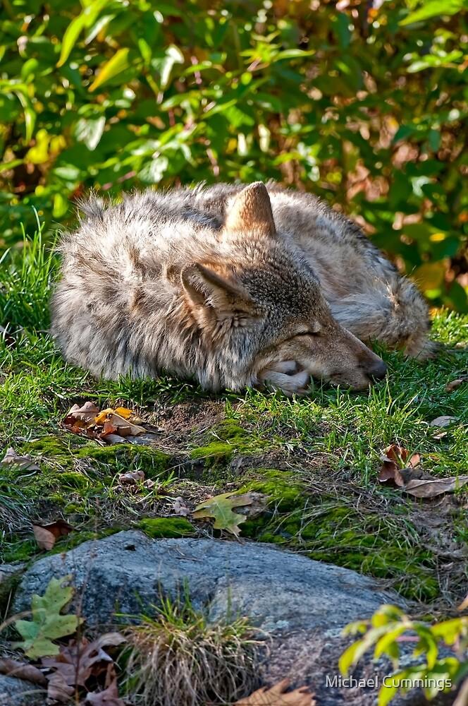 Sleep Well my Friend by Michael Cummings