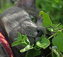 Rubinstein among the catnip by Paola Svensson