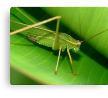 Grass Hopper Canvas Print