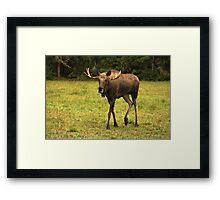 Magnus Moose Framed Print