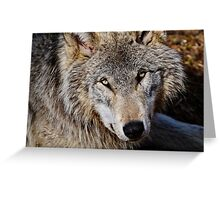 Timberwolf Portrait  Greeting Card