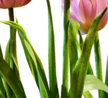 Pink Pastel Tulips Sticker