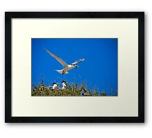Seabirds  Framed Print