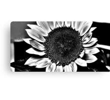 Sun Flower Suit Canvas Print