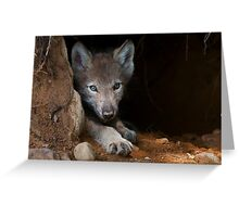 Timber Wolf Pup in Den Greeting Card