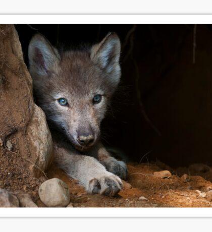 Timber Wolf Pup in Den Sticker