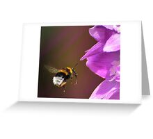 Bee  and Delphinium Greeting Card