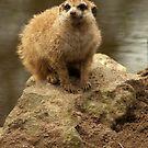 Little sandman by steppeland