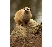 Little sandman Photographic Print