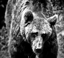 Bear Essentials by Aj Finan