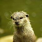 "Little muddy - ""I just *had* a bath!"" by steppeland"