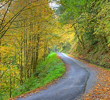 Canyon Creek Road, Mt. Baker Wilderness Area by Barb White