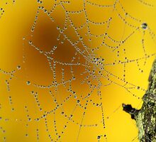 Autumn morning web by Pauline-W