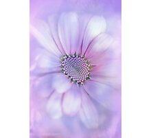Precious Flower.... Photographic Print