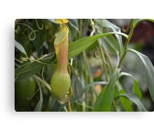Pitcher Plant or Pokemon? Canvas Print