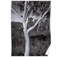 Gum Tree One Poster