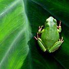 Frog on the Dark Side by kibishipaul
