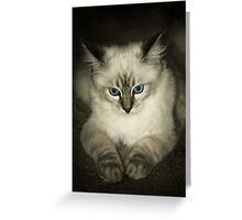 Just Because I'm Moody Doesn't Mean You're Not Irritating.... Greeting Card