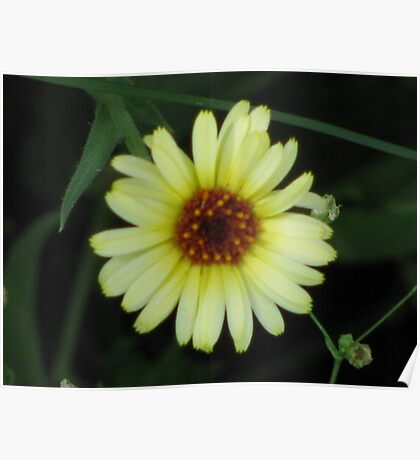 yellow and white flower Poster
