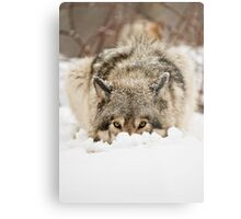 Whose The Pretty Puppy? Metal Print