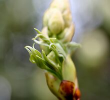 The beginning of new leaves by Melani