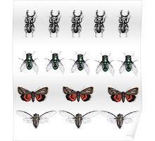 Repeated insect illustration  Poster