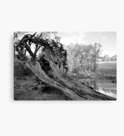 Treeroots in Black and White. Canvas Print