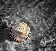 She Sells Sea Shells by Erin Valickis