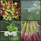 Grevillea Collage by MissyD