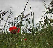 Down in the Meadow by Janet Watson