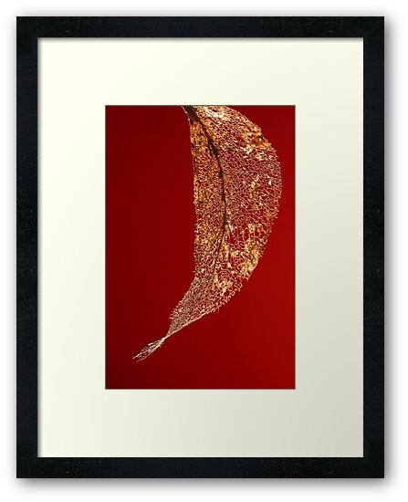 Framework in Red by Barb Leopold