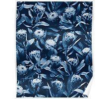 Evening Proteas - Denim Blue Poster