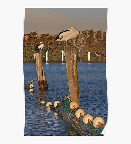 Poles Apart, Pelicans Settling in for the Night Poster