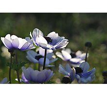 Blue Photographic Print
