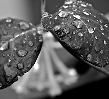 Brilliants water drops - Bad Girls Dreams  and  Desire. Brown Sugar Vintage Art  STORYBOOK.  Views (411) favorited by (1) thank you ! by © Andrzej Goszcz,M.D. Ph.D