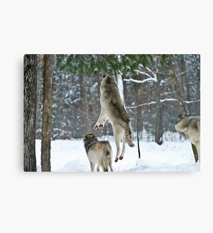 When Wolves Fly Canvas Print
