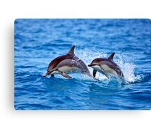 Midway Atoll Spinner Dolphins Canvas Print