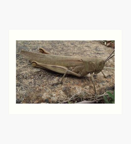Armour Plated - Grasshopper Art Print