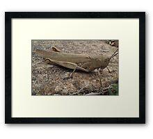 Armour Plated - Grasshopper Framed Print