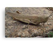 Armour Plated - Grasshopper Canvas Print