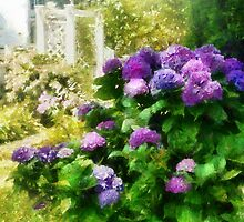 Flower - Lovely Hydrangea  by Mike  Savad