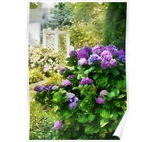 Flower - Lovely Hydrangea  Poster